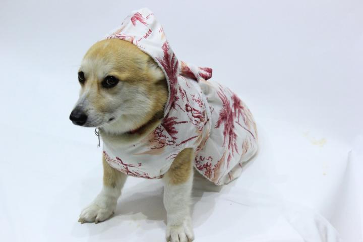 オリジナルわんちゃん用バスローブ