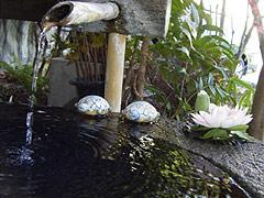 写真:亀とスイレン