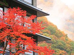 写真:紅葉の季節