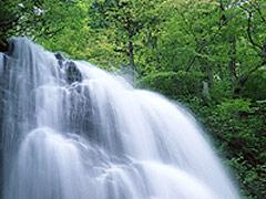 写真:富士の恵み