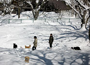 写真:雪のドックラン