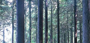 写真:硫黄谷百年杉庭園