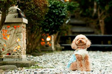 写真:愛犬撮影会