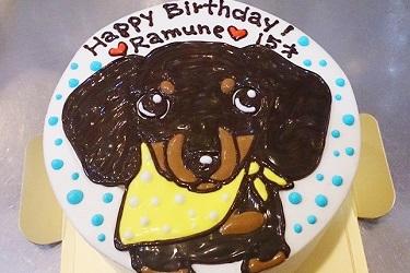 写真:ペット用ケーキ