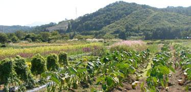 写真:自家農園