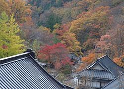 写真:秋の頃