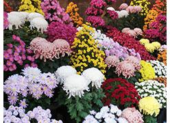 写真:百花繚乱四季折々に咲き競う花景色
