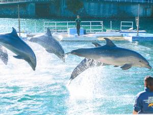 下田海中水族館◇入館券付プラン【おまかせ】 イルカに会える!特典付入館券+宿泊でお得