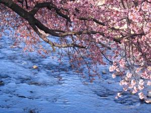 【公式HP】【早春の味覚】早咲きの河津桜を愛でる春限定オリジナル懐石~オーベルジュの春旅