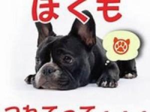 【1日3室限定★わんちゃん部屋】<特典付>わんちゃん1匹無料(小型犬4.5kg迄)で大切な家族応援!