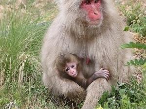 【地獄谷野猿公苑チケット付き】地獄谷野猿公苑が最寄りの仙壽閣から、スペシャルプラン♪