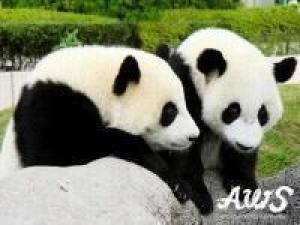 【パンダを見に行こう】★アドベンチャーワールド入場券付でお得!★宿から車で約10分★