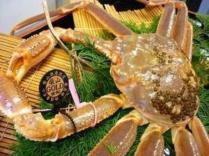【冬】【柴山ゴールドタグ】1.4㎏以上の幻の黄金蟹をひとり1杯