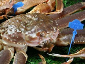 【冬】【番ガニ】1㎏以上の蟹を二人で3杯使用◆焼き牡蠣付