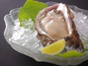 【夏の味覚】海のミネラルたっぷり!濃厚な味わい 富山湾 天然岩牡蠣